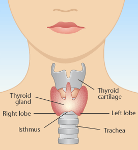 Thyroid Lumps